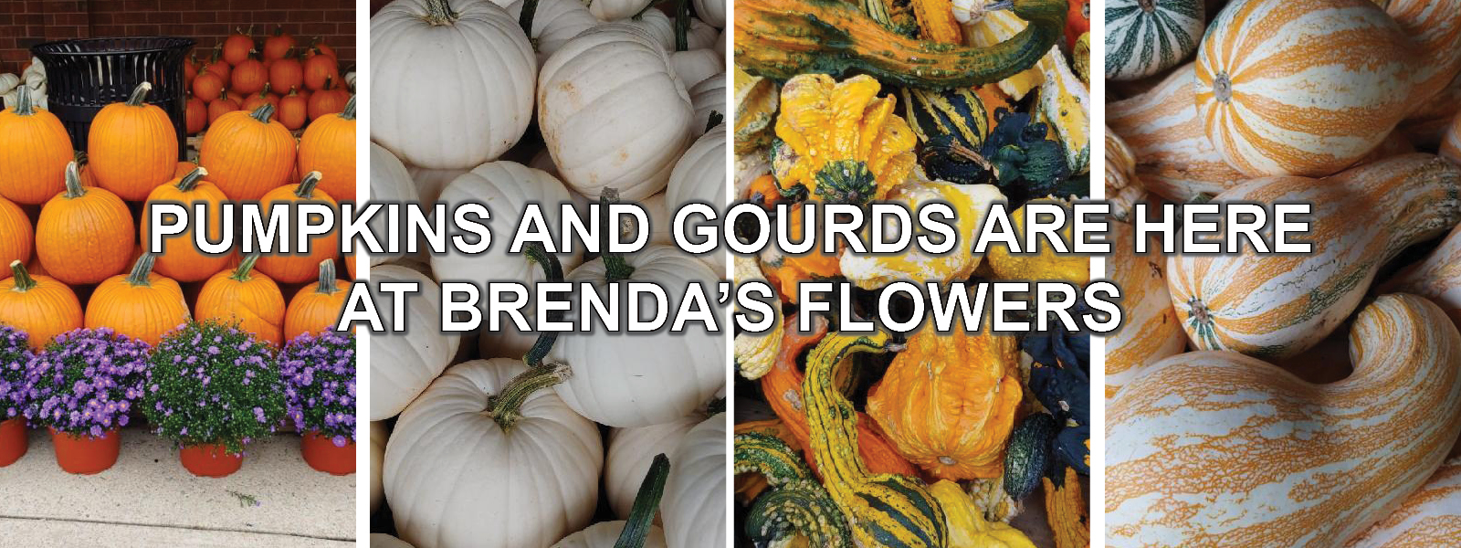 pumpkins and gourds brendas flowers